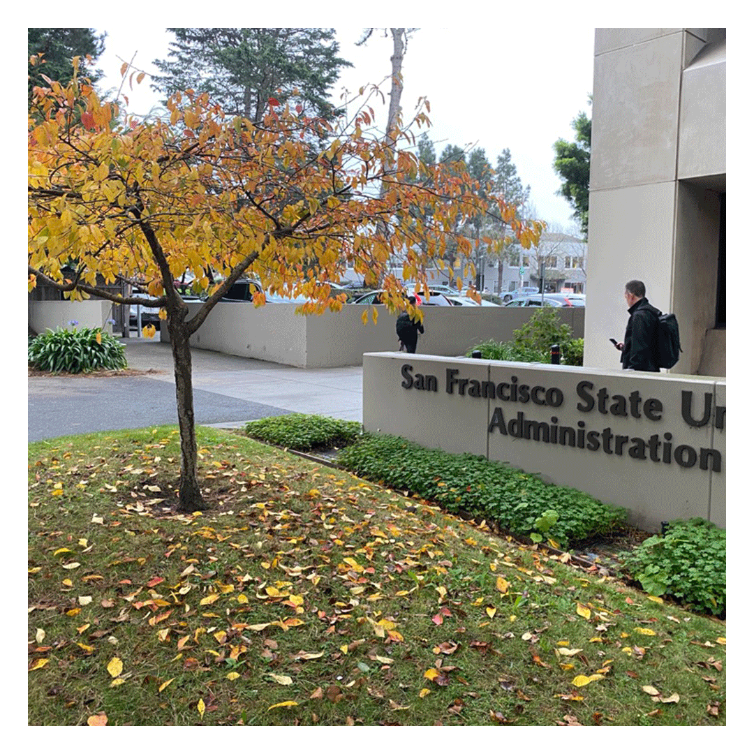 Fall leaves outside the San Francisco State University Administration Building