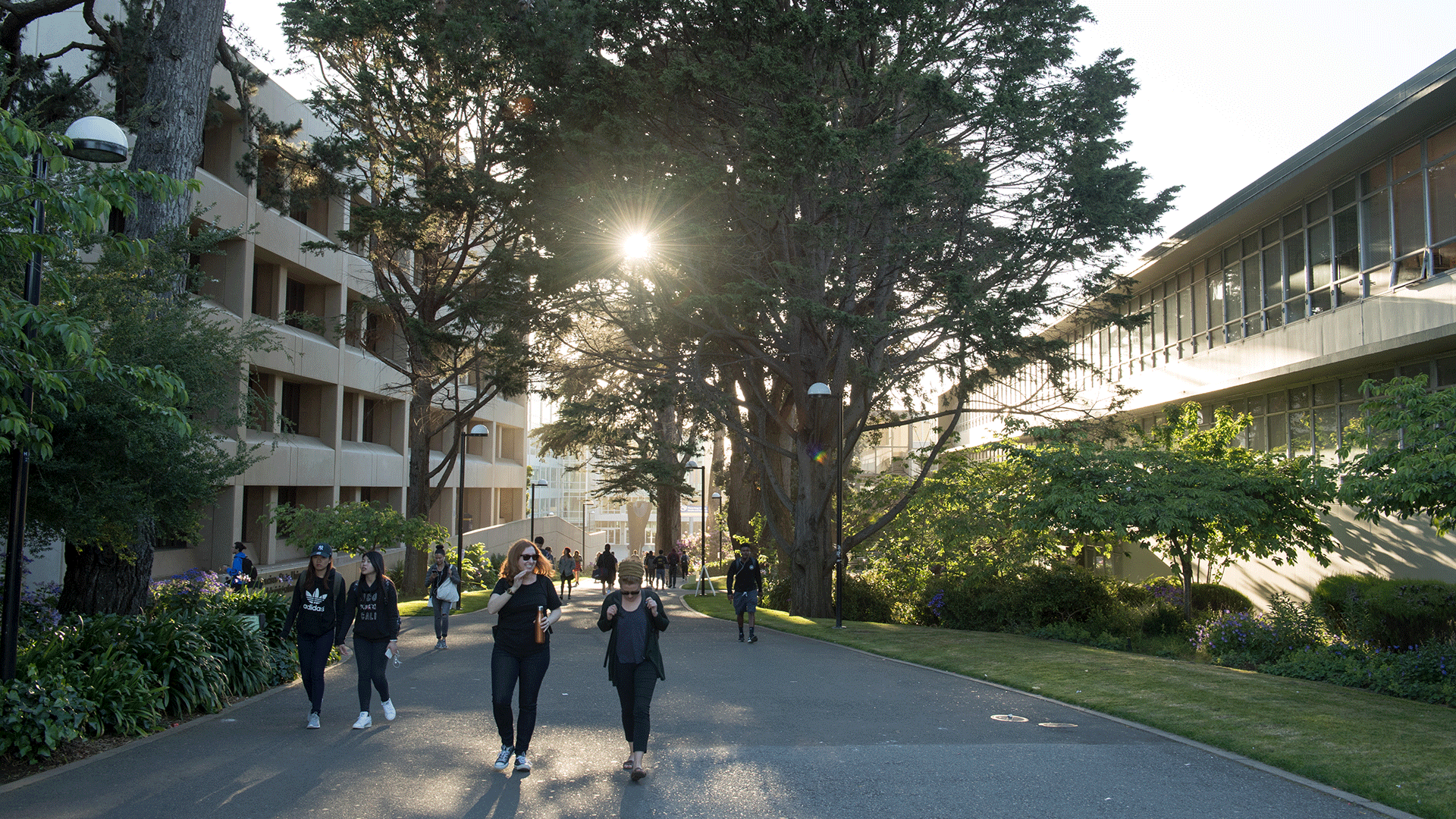 Students walking on campus, with sunshine through the trees behind them